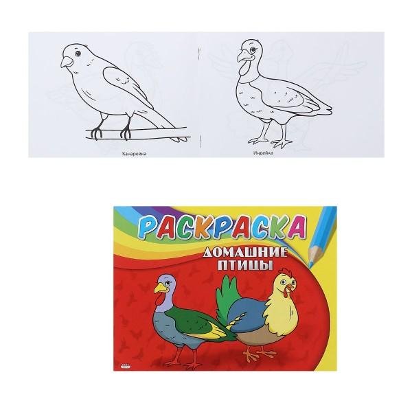 """051541 Раскраска А5, 4л.""""Домашние птицы"""""""