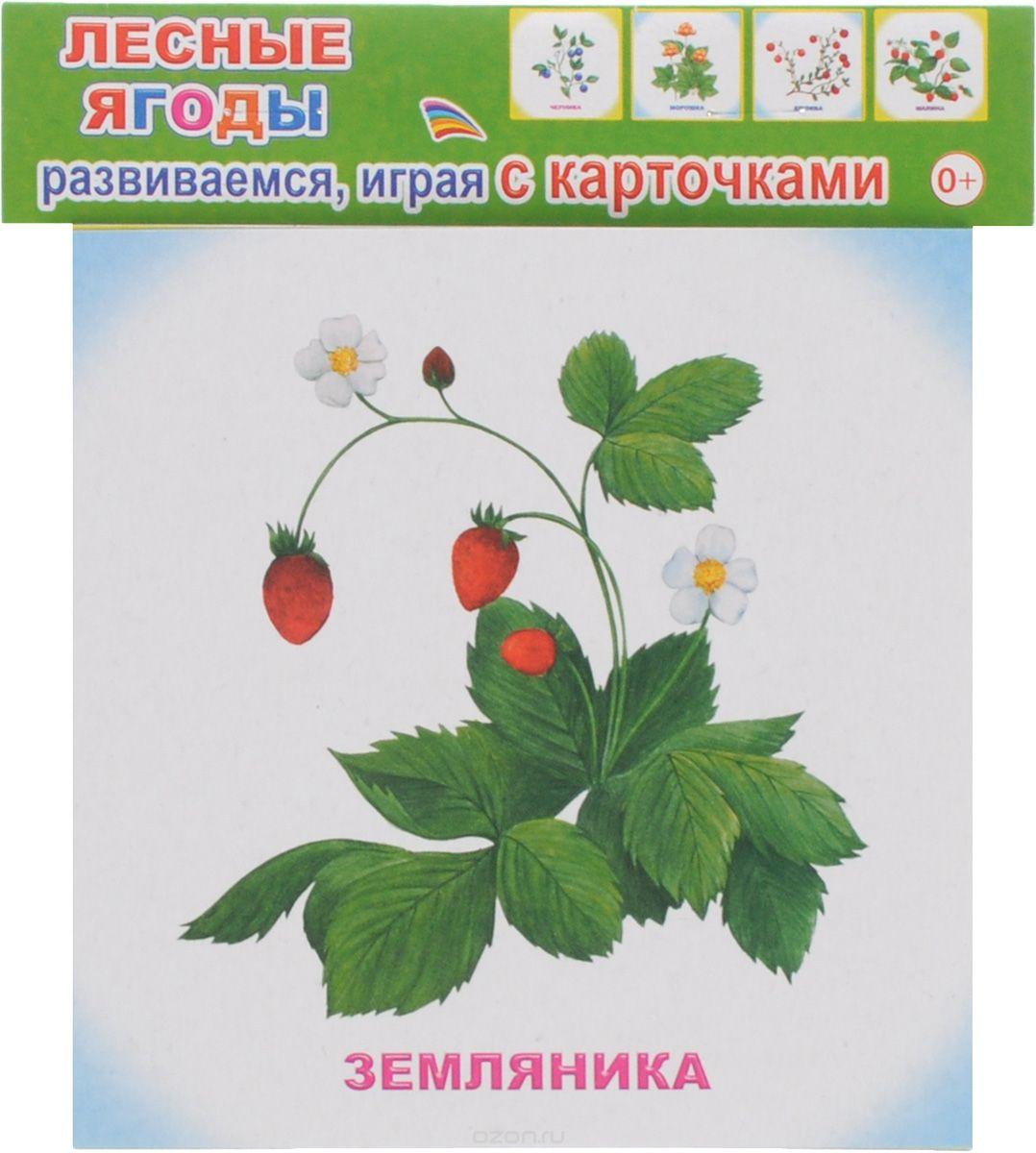 """035831 12 обуч.карточек """"Лесные ягоды"""""""